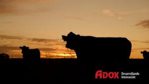genoma de una bacteria que amenaza al ganado